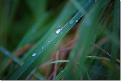 rain-drop