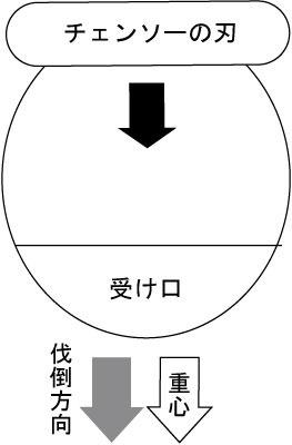 伐倒解説図2