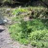 雑草と野草の見わけ方